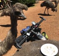 Emu a Donnelly River Village