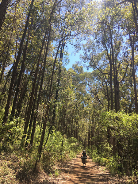 Baden Powell Park, poco dopo Dwellingup