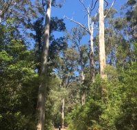 Tall timbers, tra Nannup e Manjimup