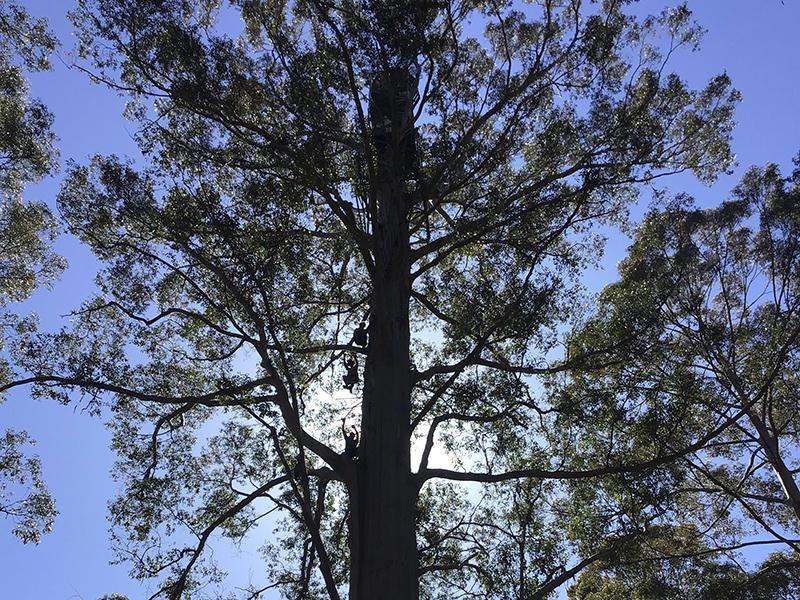 Scalando il Gloucester Tree