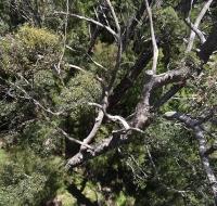 La foresta dal Tree Top Walk