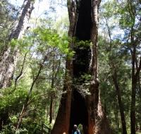 Tree Top Walk, Ancient Empire trail