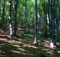 Foresta di Faget